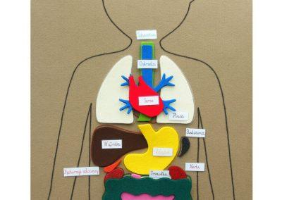 Mata anatomia człowieka