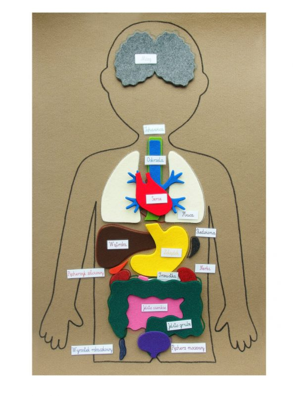 Mata anatomia człowieka układanka Montessori