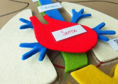 Mata anatomia człowieka- serce układanka Montessori